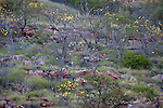 Mornington Sanctuary, Kimberley Region, Western Australia