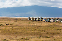 Tanzania. Ngorongoro Crater, Tourist Game Drive Vehicles Lined up to See a Lion.