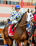 OZONE PARK, NY - MARCH 05: Laoban#1 in Gotham Stakes Day at Aqueduct Race Track in Ozone Park, New York on March 5, 2016. (Photo by Sue Kawczynski)