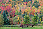Autumn view near Dixville Notch, Dixville, NH, USA