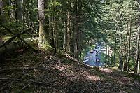 breakaway group through the forest<br /> <br /> stage 7: Aoste > Alpe d'Huez (168km)<br /> 69th Critérium du Dauphiné 2017