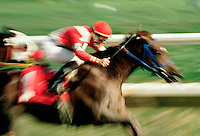 .Jockey and mount race toward the finish line..