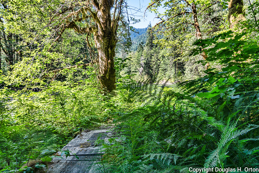 Trail up the Hamma Hamma River in the Olympic Mountain rain forest near Hood Canal at Twanoh State Park, Washington, USA