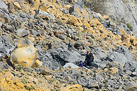 BNPS.co.uk (01202 558833)<br /> Pic: Graham Hunt/BNPS<br /> <br /> People ignoring safety advice to keep clear of the huge cliff fall at Seatown in Dorset.<br /> <br /> A fossil hunter scrambling over the landslip looking for fossils.