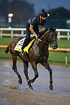 September 3, 2020:  Storm the Courtexercises as horses prepare for the 2020 Kentucky Derby and Kentucky Oaks at Churchill Downs in Louisville, Kentucky. The race is being run without fans due to the coronavirus pandemic that has gripped the world and nation for much of the year. Evers/Eclipse Sportswire/CSM