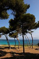 Isola di Pianosa.Pianosa Island.Pianosa. Il borgo.Village.La pineta. The pine forest..