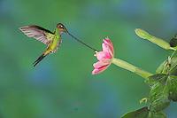 Hummingbirds Portfolio