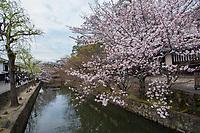 Japan, Okayama Prefecture, Kurashiki. Cherry blossoms along the river.