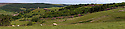 24/06/15<br /> <br /> ***A digitally stitched panorama from four images***<br /> <br /> Summer sunshine illuminates acres of purple rhododendrons surrounding Boot's Folly high up on Strines Moor in the South Yorkshire Peak District near Sheffield.<br /> All Rights Reserved - F Stop Press.  www.fstoppress.com. Tel: +44 (0)1335 418629 +44(0)7765 242650