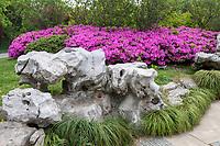 Yangzhou, Jiangsu, China.  Azaleas and Rock Formation in the Slender West Lake Park.