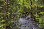 Snoose creek in the Chequamegon National Forest.