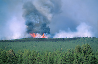"""""""Leroux Fire"""" burns through forest of ponderosa pine and mixed conifers in Coconino National Forest, Arizona, AGPix_0165."""