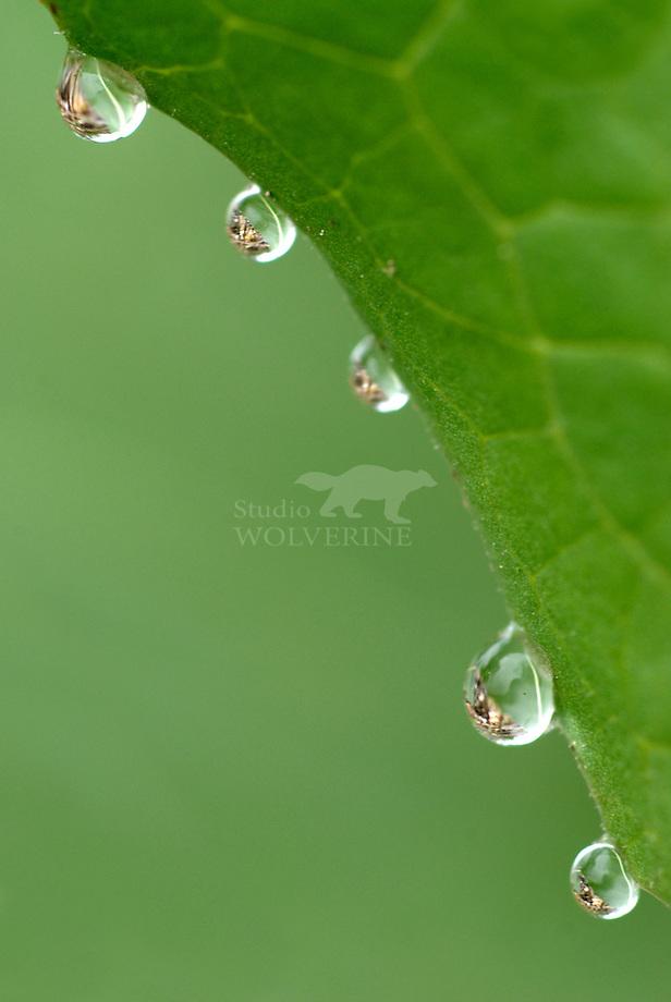 Druppels als lensjes, de omgeving reflecterend