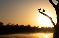 Egyptian Geese are often present (and loud) at the Lake Panic Hide in Kruger National Park.