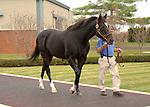 17  November  2009 Kentucky Stallions.  Medaglia d'oro   at Darley @ Jonabell farm.  Medaglia d'oro is the sire of the sensational filly, Rachel Alexandra.