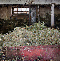 Hay in a barn bin to feed livestock.