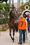 DEL MAR,CA-AUGUST 20: Harmonize is entering the paddock before the Del Mar Oaks at Del Mar Race Track on August 20,2016 in Del Mar,California (Photo by Kaz Ishida/Eclipse Sportswire/Getty Images)