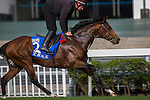 DEC 11,2015: Mondealiste ,trained by David O'Meara,exercises in preparation for the Hong Kong Mile at Sha Tin in New Territories,Hong Kong. Kazushi Ishida/ESW/CSM