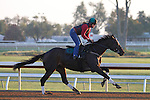 October 23, 2015:  Frivolous, trained by Vicki Oliver, and owned by G. Watts Humphrey, is entered in the Breeder's Cup Longines Distaff Grade 1 $2,000,000.  Candice Chavez/ESW/CSM