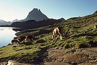 """Europe/France/Aquitaine/64/Pyrénées-Atlantiques/Parc National des Pyrénées/Pic du Midi-d'Ossau: Le lac d'Ayous et pottoks (prononcé """"pottiok"""")"""