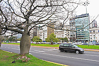the Avenida 9 Julio Avenue of ninth of July, said to be the world's widest street, lined by trees and modern office block buildings. Strange odd bulging fat trees lining the street XXX. Cars passing by, traffic. Buenos Aires Argentina, South America