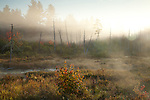 Mud Brook near Moosehead Lake in Piscataquis County, ME, USA
