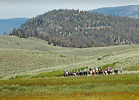 A group of trailriders on horseback in Yellowstone National Park