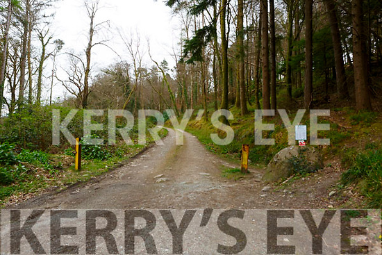The entrance to the woods where Damien Lyne had a tragic fall on Friday