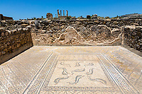 Volubilis, Morocco.  Mosaics Showing Dolphins in the House of Orpheus.