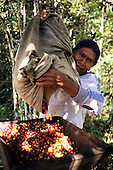 San Juan del Oro, Peru. Man processing coffee.