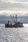 Power scow, Chichagof, fish tender, Boat Haven Marina, Port Townsend, 05/2020 Washington State, Puget Sound, WW II US Army, BSP 2723, fishing boats, MV Chichagof, Maritime Shipyards,