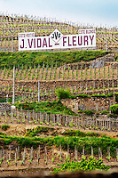 Terraced vineyards in the Cote Rotie district around Ampuis in northern Rhone planted with the Syrah grape.A sgin saying J Vidal-Fleury, Cote Rotie Cote Blonde.  Ampuis, Cote Rotie, Rhone, France, Europe