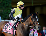ARLINGTON HEIGHTS, IL - AUGUST 12: Sarandia #8, ridden by Andrasch Starke, during the post parade before the Beverly D. Stakes on Arlington Million Day at Arlington Park on August 12, 2017 in Arlington Heights, Illinois. (Photo by Jon Durr/Eclipse Sportswire/Getty Images)