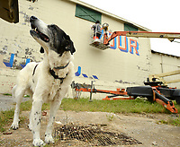 "Artist Olivia Trimble of Fayetteville paints a mural from atop a lift Friday, Sept. 11, 2020, as her dog, Mabel, keeps watch below at Southyard in Fayetteville. The mural will read the words ""Love Your Neighbor"" in a design that will also be made available on a T-shirt, the sales from which will be used to help provide food for people in the area who need it. South Yard plans to build a mixed-use structure at the former site of the Farmers Cooperative and wanted to decorate the portion of the building that they are planning to incorporate into the new structure as a way to be a good neighbor. Visit nwaonline.com/200912Daily/ for today's photo gallery. <br /> (NWA Democrat-Gazette/Andy Shupe)"
