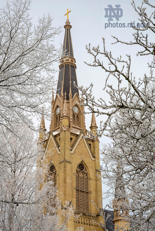 February 17, 2021; The Basilica of the Sacred Heart's steeple on a frigid winter morning. (Photo by Barbara Johnston/University of Notre Dame)