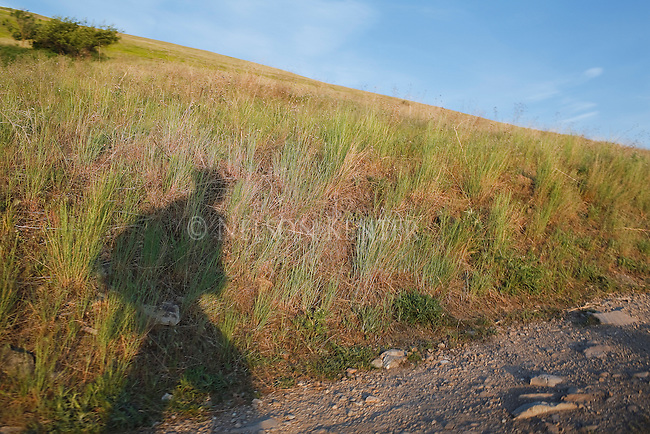 The shadow of a hiker walking up a Mount Sentinel trail in Missoula, Montana