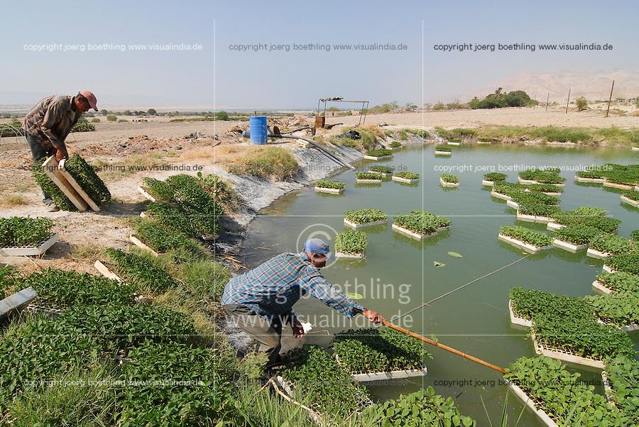 JORDANIEN Wassermangel und Landwirtschaft im Jordan Tal, Farmer mit Gemuese Setzlingen an einem Wassertank / JORDAN, water shortage and agriculture in the Jordan valley , farmer with vegetable seedlings, swimming nursery in water pond