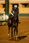 JULY 18, 2021: Tizamagician with Flavien Prat wins the Cougar II Handicap at Del Mar Fairgrounds in Del Mar, California on July 18, 2021. Evers/Eclipse Sportswire/CSM