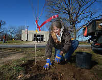 Carla Parker, a maintenance specialist at Battlefield State Park in Prairie Grove, works with coworkers Wednesday, Nov. 18, 2020, to plant dogwood trees around Hindman Hall Museum at the park. Park staff wanted to plant trees that would flower in the spring and help replace trees that had to be removed because of age and disease earlier this year. Visit nwaonline.com/201119Daily/ for today's photo gallery. <br /> (NWA Democrat-Gazette/Andy Shupe)