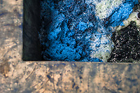 A blue foam is seen at the top of the water solution containing indigo, while being stirred in a concrete tank at the semi-industrial manufacture near San Miguel, El Salvador, 12 November 2016. For centuries, indigo, a natural deep blue dye extracted from the leaves of tropical plants (Indigofera), has been known to the native indigenous inhabitants of Central America who used the blue tincture to color their fabrics and pottery. Although demand for natural indigo dropped significantly at the end of 19th century when a synthetic indigo was firstly introduced, commercialization of natural indigo has risen again during the last decades. Small-scale indigo farms, processing the crop on sustainable and ecological basis, are growing throughout the country, returning El Salvador to the place of the main natural indigo producer in Latin America.