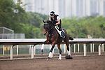 APR 24,2015:Staphanos,trained by Hideaki Fujiwara,prepares for the Audemars Piguet Queen Elizabeth 2nd Cup at Sha Tin in New Territories,Hong Kong. Kazushi Ishida/ESW/CSM