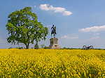 Gettysburg National Military Park, PA<br /> Statue of Major-General John Reynolds with a field of yellow mustard on McPherson Ridge