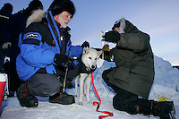 """Sunday March 11, 2007   ----   Volunteer drug testers, known as the """" P-Team"""" Roy Cantalano (left) and Melanie Hull take a urine sample from a Lance Mackey dog at the Unalakleet checkpoint on Sunday evening."""