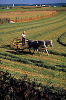 Horse team pulling farm equipment in a hay field. Amish man. Strasburg Pennsylvania USA Lancaster County.