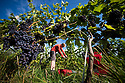 2018_09_07_Amber_Valley_Wines