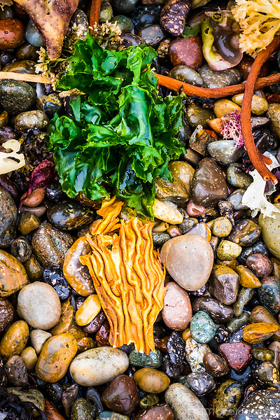 Colorful seaweed and ocean plants on rocky shore