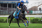 SHA TIN,HONG KONG-APRIL 26: Bow Creek,trained by John O'Shea,exercises in preparation for the Champions Mile at Sha Tin Racecourse on April 26,2016 in Sha Tin,New Territories,Hong Kong (Photo by Kaz Ishida/Eclipse Sportswire/Getty Images)