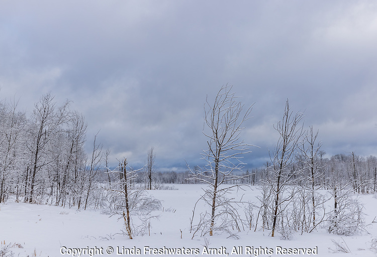 A frozen wetland in northern Wisconsin.