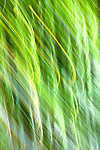 Abstract of green bamboo