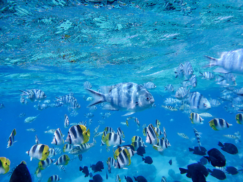 Triopical fish. Bora Bora. French Polynesia